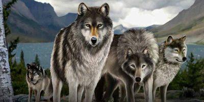 MICROGAMING Untamed Wolf Pack header